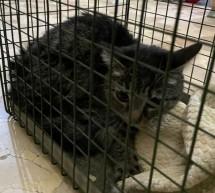 Polizia Municipale e Vigili del Fuoco salvano gattino rimasto solo per quasi un mese