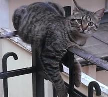Per i gatti del Filadelfia avviata la messa in sicurezza