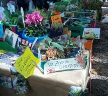 Ortomobile, le coltivazioni prodotte dalle scuole di Torino