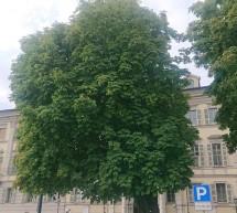 Piazza Carlo Emanuele II, sarà abbattuto l'ippocastano di fronte alla caserma dei Carabinieri