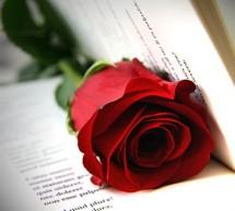 Una rosa di libri. Portici di carta per Sant Jordi