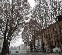 Da lunedì 25 gennaio al via i lavori di potatura dell'alberata di corso Regina Margherita