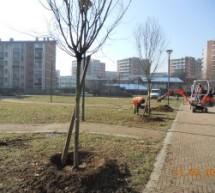 Torino vince il Premio Città per il Verde