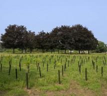Tremila nuovi alberi nel parco Piemonte grazie a Mellin