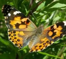 """""""Farfalle in ToUr"""", il progetto raccontato in una mostra fotografica"""