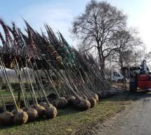 Una mano all'ambiente grazie ai 450 alberi forniti da INFRA.TO alla Città