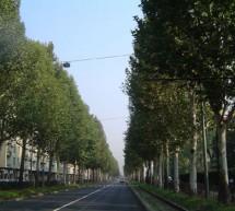 Interventi in corso sul patrimonio arboreo torinese
