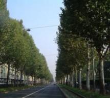 Potatura dei platani in corso IV Novembre e corso Agnelli: cantieri per due mesi