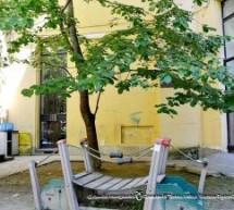 Controllato l'albero dell'asilo nido di piazza Cavour