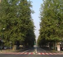 La cura degli alberi: gli interventi in corso