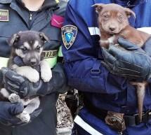 I vigili salvano due cuccioli intrappolati in un canale di scolo