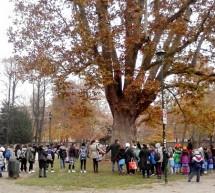 Proteggi un albero, proteggi il futuro