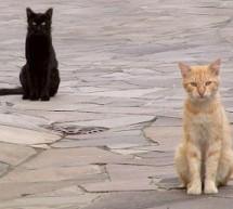 """Al via la campagna di sterilizzazione dei gatti """"senza padrone"""""""