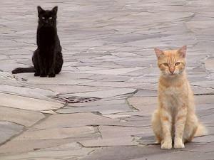 gatti-randagi
