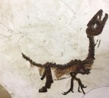 """""""Cretaceo kids"""", la mostra che avvicina i bambini alla paleontologia"""