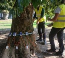 La cura degli alberi del giardino Lamarmora