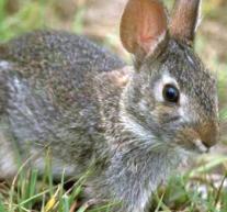 Una colonia di conigli stoppa i lavori al Parco Mennea