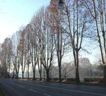 La primavera porta nuovi alberi in città