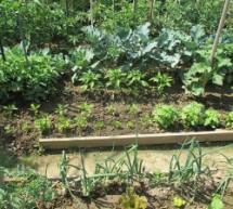 Coltivare gli orti si può, evitando gli assembramenti