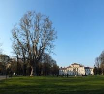 Alberi monumentali, a Torino sono sedici