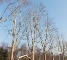Bilancio arboreo: 38mila nuove piante in cinque anni