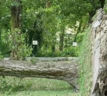 Tempesta a Torino, danni contenuti al patrimonio arboreo