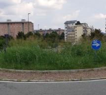 Un'infestante la causa delle segnalazioni di erba alta in città