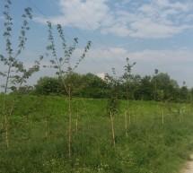 """Crescono e stanno bene gli alberi di """"Mille Alberi"""""""