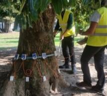 Cura degli alberi: interventi nei quartieri centro-sud